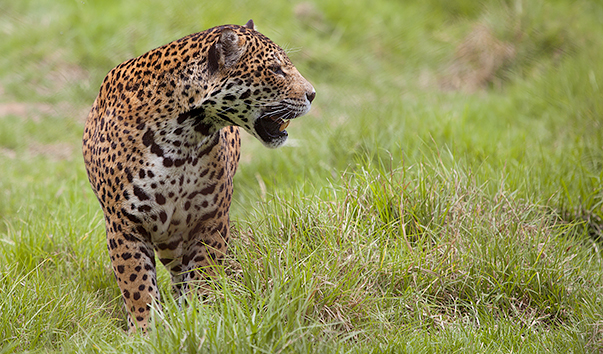 Harmonizing the relationship between people, carnivores and the ...